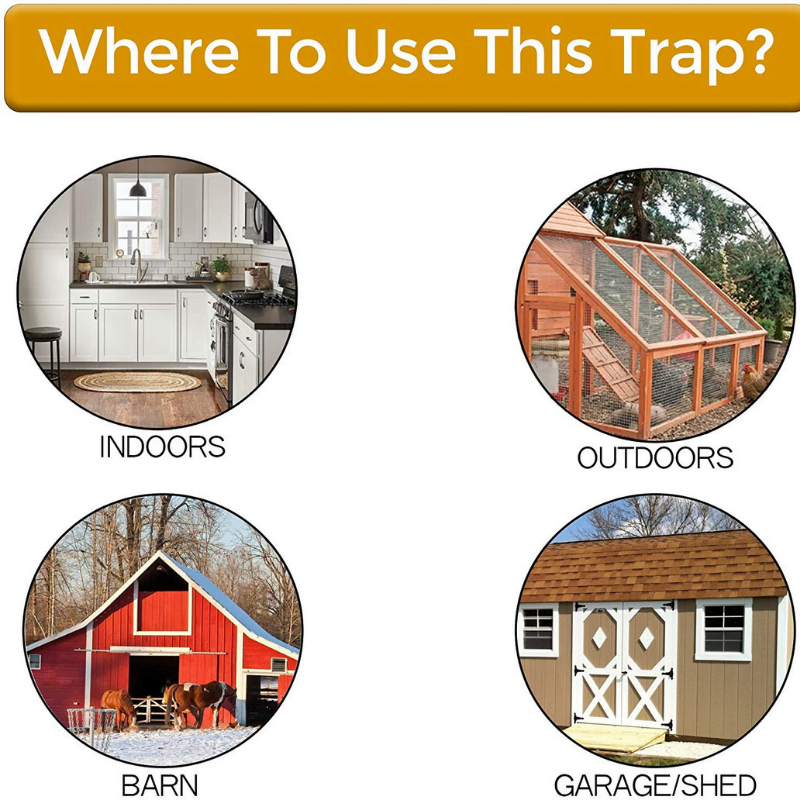 Where To Use This Rat Trap